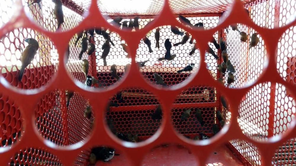 Aves eram transportadas em ônibus clandestino — Foto: Arquivo pessoal