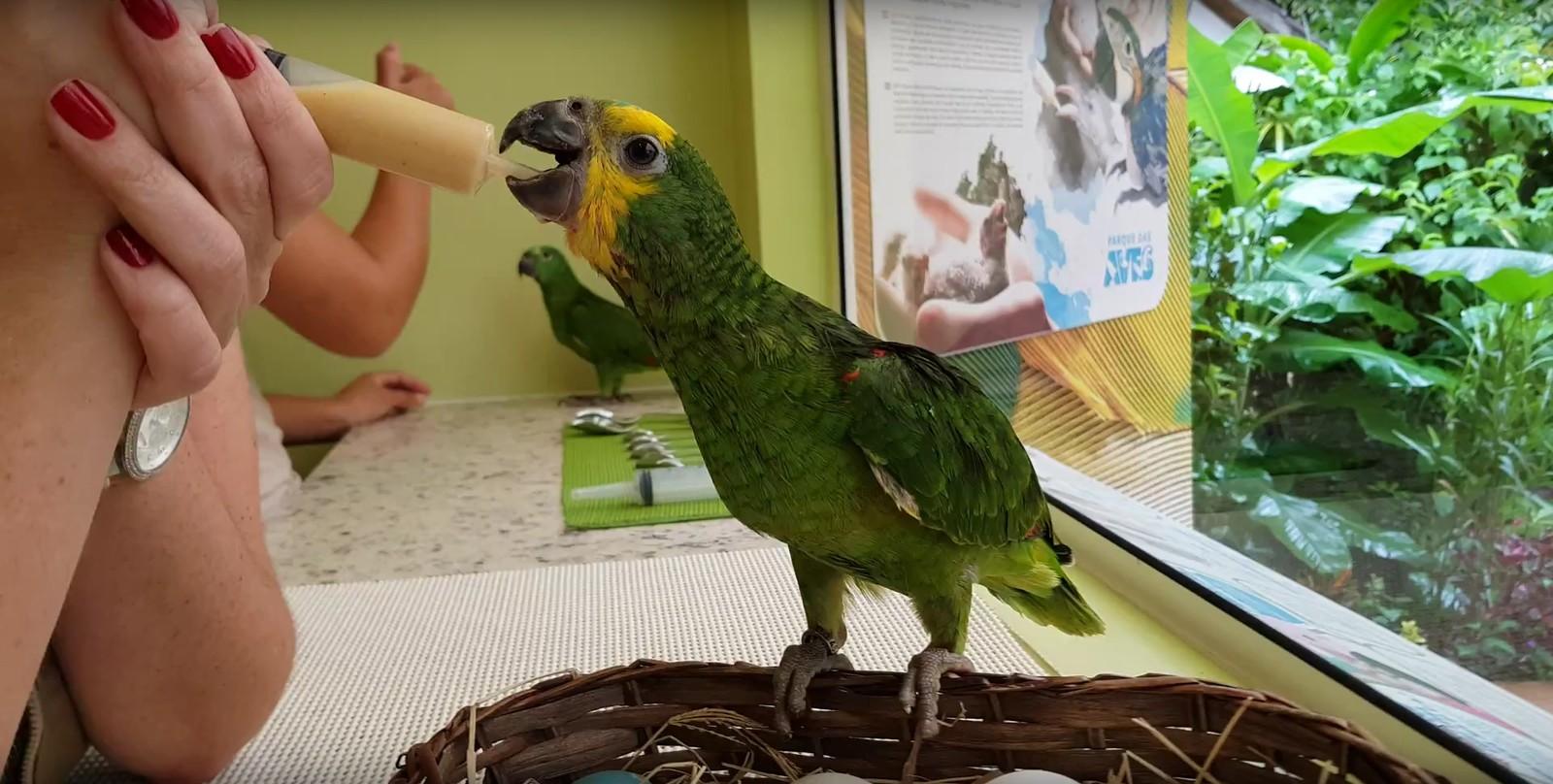 De janeiro a junho de 2019, Parque das Aves recebeu mais de 120 pássaros resgatados de posse ilegal, tráfico e contrabando — Foto: Divulgação/Parque das Aves