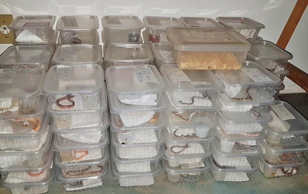 Serpentes eram mantidas em caixas para serem entregues pelo Correio — Foto: Foto: Banco de Imagens Associação Mata Ciliar