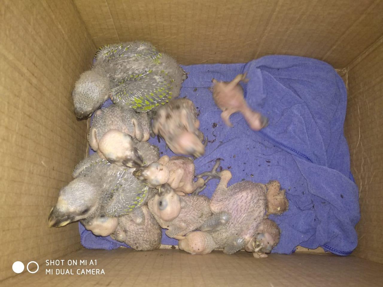 Animais estavam extremamente debilitados - Foto: Divulgação / PMA