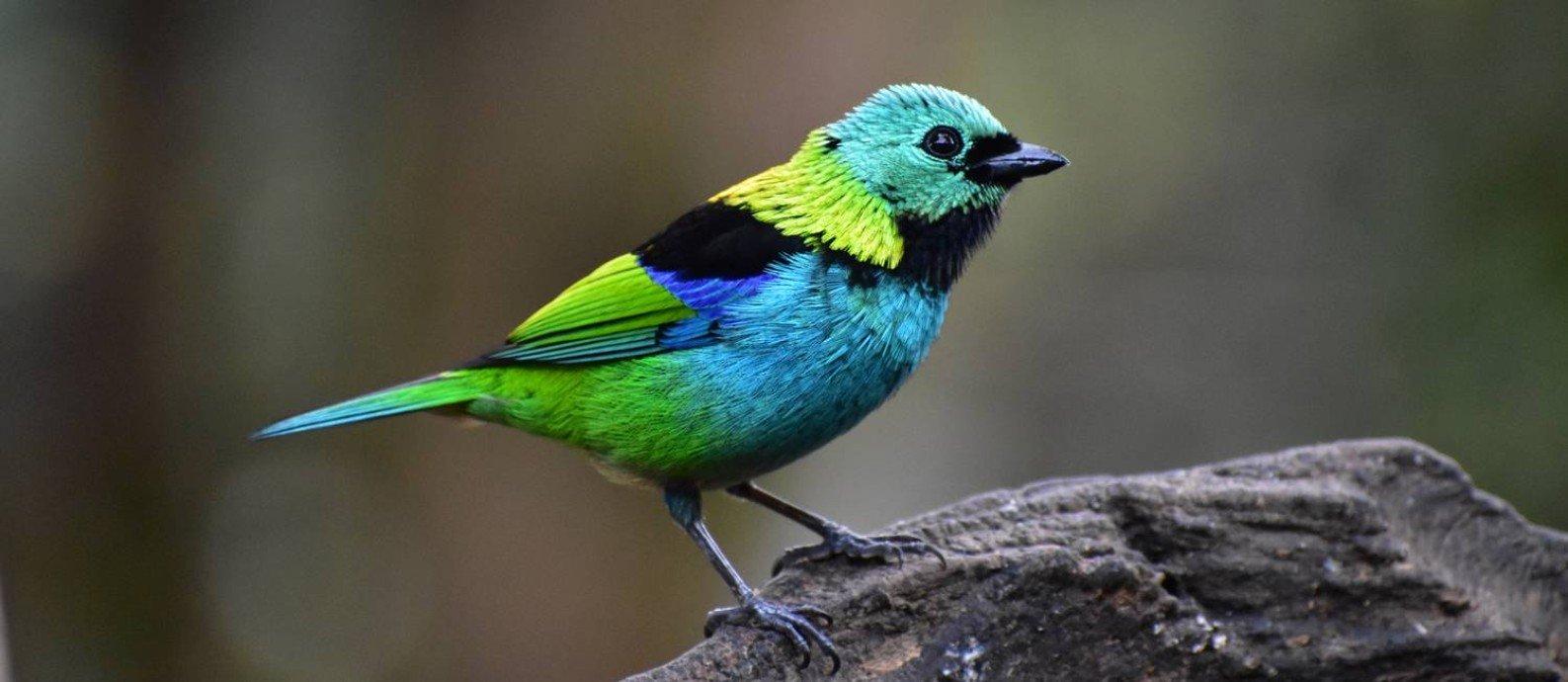 Read more about the article Tráfico de animais silvestres afeta 18% das espécies de aves, mamíferos, répteis e anfíbios