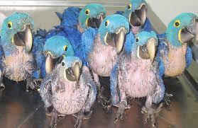 Segundo o Ibama, os pássaros representam mais de 80% do tráfico de animais no Brasil