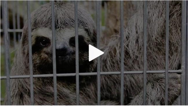 Tráfico de animais é prática antiga que compromete biodiversidade brasileira