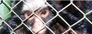 Read more about the article ONG de combate ao crime rastreia o comércio de vida selvagem no Brasil no WhatsApp e no Facebook